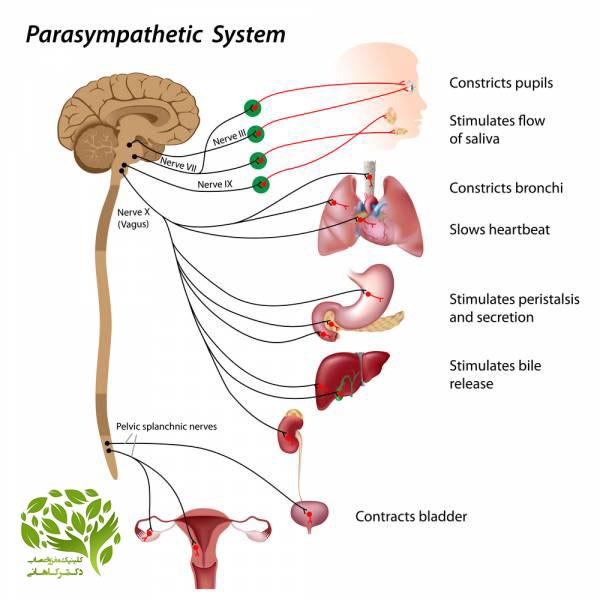 سیستم عصبی چیست
